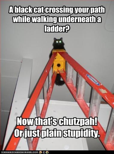 A black cat crossing your path while walking underneath a ladder? Now that's chutzpah! Or just plain stupidity.
