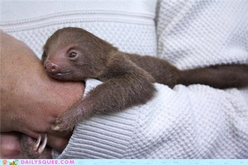 arm,baby,clinging,end,harms-way,lingering,pun,sloth,squee spree,way
