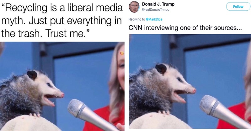 Funny memes about opossums.