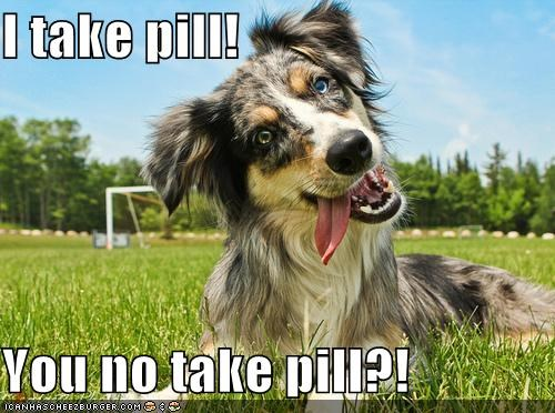 border collie,critters,dogs,medication,pill