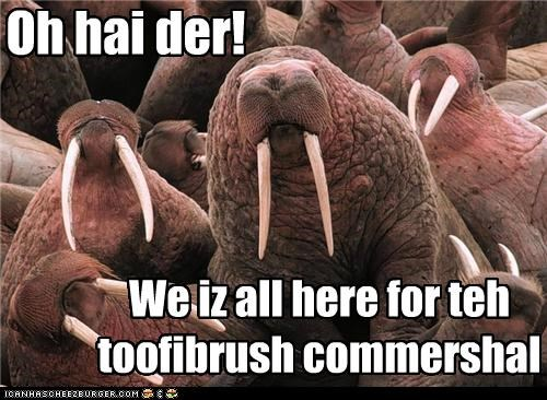 caption captioned commercial for here ohai purpose toothbrush walrus walruses