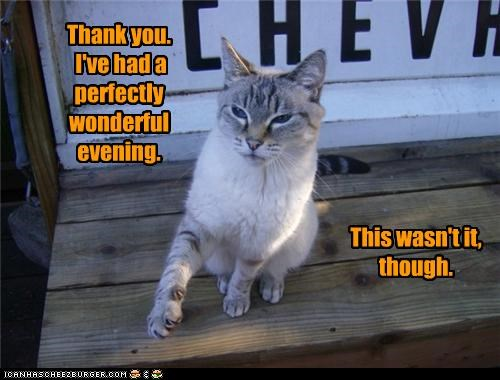 caption captioned cat evening perfectly thank you thanks this twist wasnt wonderful - 4877800448