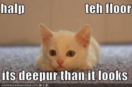 deeper floors kitten lolcats lolkittehs scared white - 487787776