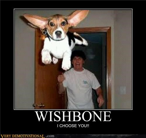 dogs,flying,hilarious,IRL,Pokémon,video games,wishbone