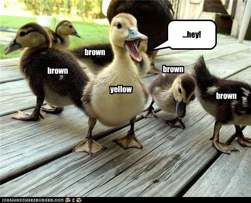 yellow brown brown brown ...hey! brown