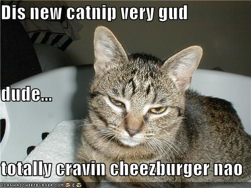 Cheezburger Image 4878842880