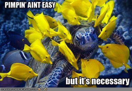 caption captioned fish pimp pimpin-aint-easy rap sea turtle - 4878928896