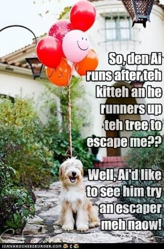 Balloons cat chasing get away idea mixed breed old english sheepdog plan