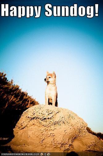 happy sundog rock shiba inu Sundog
