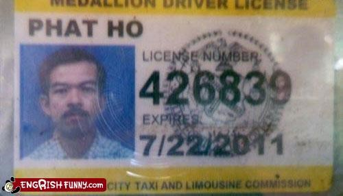 drivers license,fat,ho