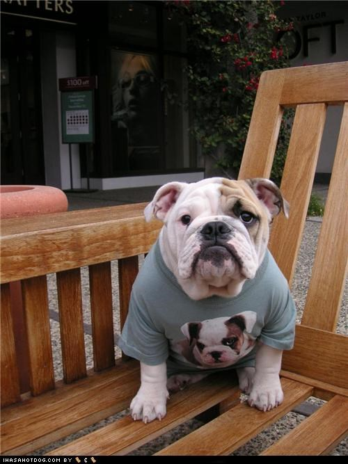 bench best of the week bulldog Hall of Fame Photo puppy Screenprint self shirt - 4879288064