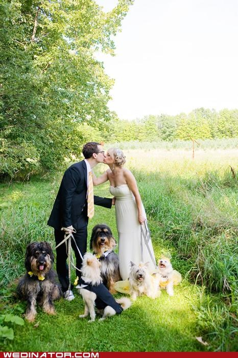 bride dogs funny wedding photos groom - 4879386112