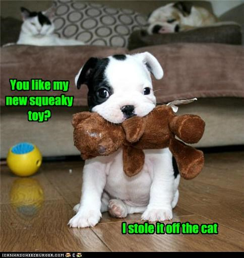 bulldog,cat,like,puppy,question,squeaky,stole,teddy bear,toy,you like