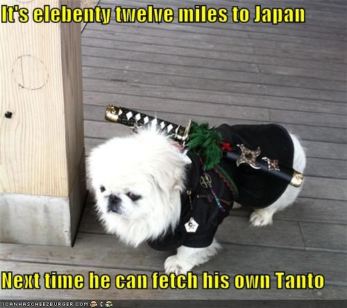 advice,distance,maltese,mixed breed,next time,tanto,upset