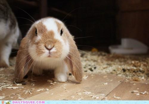 adventure Bunday bunny expedition exploring happy happy bunday rabbit