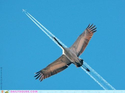 acting like animals,blue angels,flying,goose,latest,member,metaphor,metaphors,pilot
