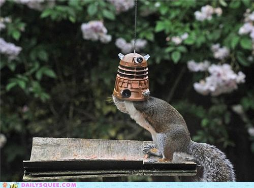 acting like animals bird feeder dalek daleks doctor who Exterminate food Hall of Fame noms squirrel - 4879998208