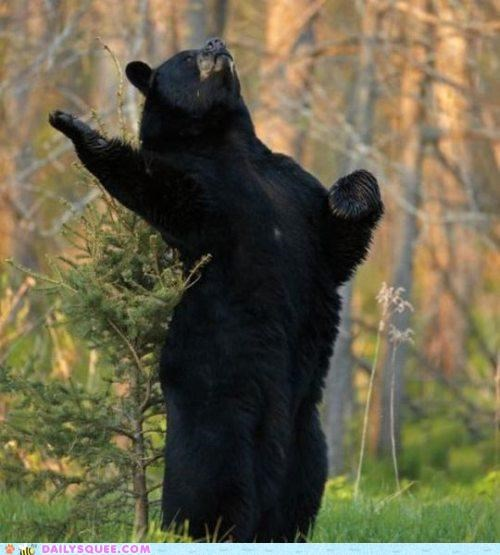 acting like animals alliteration bear black bear dramatic homophones performing redundancy soliloquy theatre