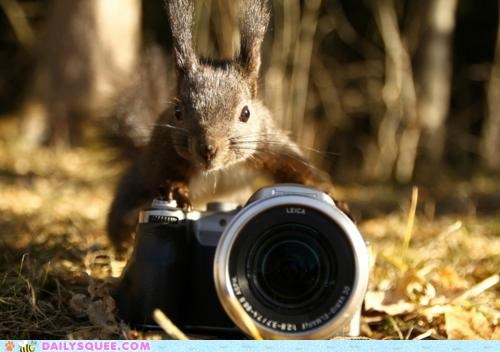 acting like animals camera clue less concerned inexperienced photography squirrel worried