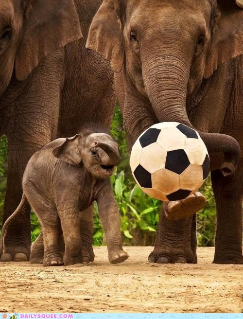 acting like animals cub elephant elephants goal Hall of Fame playing soccer - 4880042240