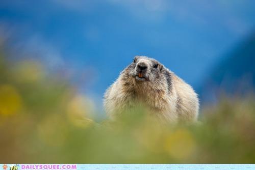 blur blurry blurs buckteeth bucktoothed cute derp divide face line squee Wombat - 4880117504