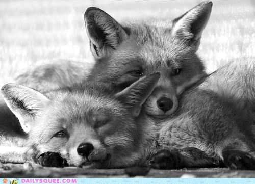 Babies baby fox foxes FoxTrot kit kits remains removal squee trot - 4880190976