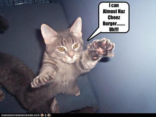 Cheezburger Image 4880248320
