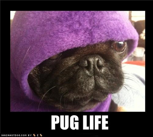 best of the week,dressed up,Hall of Fame,hoodie,life,pug,pun,sweatshirt,thug life