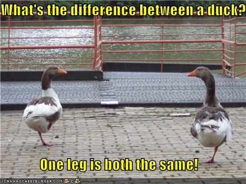What's the difference between a duck?  One leg is both the same!