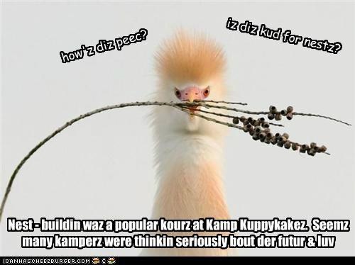 Cheezburger Image 4881723136