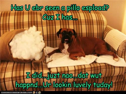 Has U ebr seen a pillo espload? Cuz I has... I did...juzt nao...dat wut happnd...Ur lookin luvely tuday!