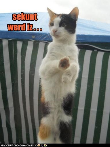 caption captioned cat charades is second word - 4881801472