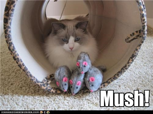 caption,captioned,cat,Command,mice,mouse,mush,toy,toys