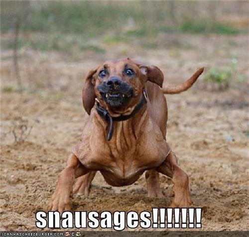 Cheezburger Image 4882640896