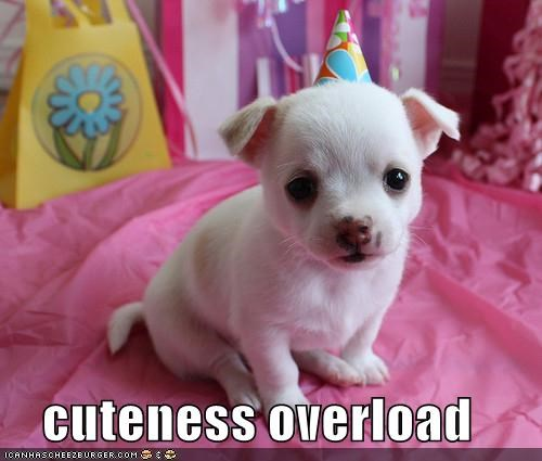 cuteness overload puppy whatbreed - 4882777600