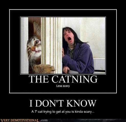 cat creepy hilarious scary wtf - 4882824448