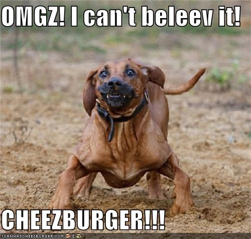 Cheezburger Image 4883535104