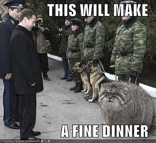 Cats Dmitry Medvedev political pictures - 4883962624