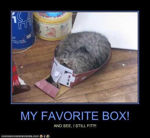 box,caption,captioned,cat,favorite,fit,my,see,still