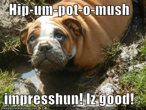 best of the week,bulldog,doing it right,Hall of Fame,hippo,hippopotamus,impression