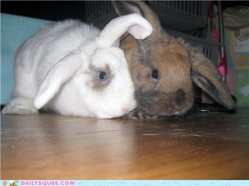 bunnies bunny cuddle buddies cuddling neologism portmanteau reader squees term - 4884668672