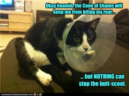 Okay hoomin, the Cone of Shame will keep me from biting my rear... ... but NOTHING can stop the butt-scoot.