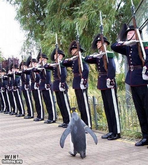 animals army penguins salute - 4885168640