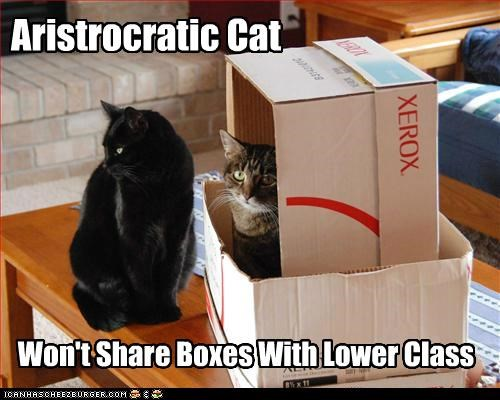 Aristrocratic Cat Won't Share Boxes With Lower Class