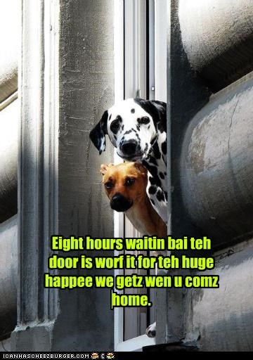 coming dalmatian do want eight home homecoming hours human love waiting whatbreed worth it - 4886039296