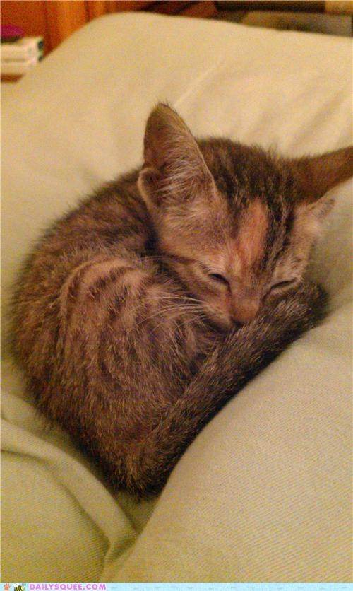 amazing car cat corvette engine found heartwarming kitten miracle namesake reader squees rescued touching - 4886492160