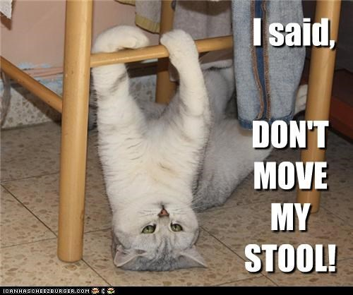 caption captioned cat dont mine move my said stool