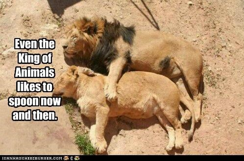 animals,caption,captioned,even,king,likes,lion,lioness,lions,now and then,occasionally,spoon,spooning