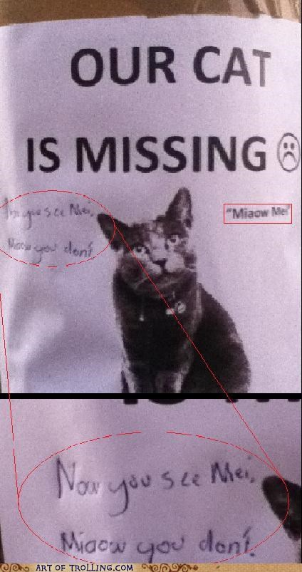 cat IRL miaow mei missing - 4887349760