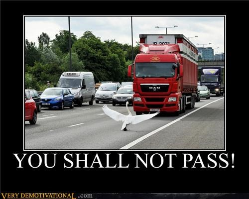 animal,cars,duck,Hall of Fame,Sad,swan,truck